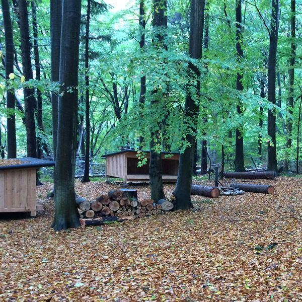 Shelters Kollund skov