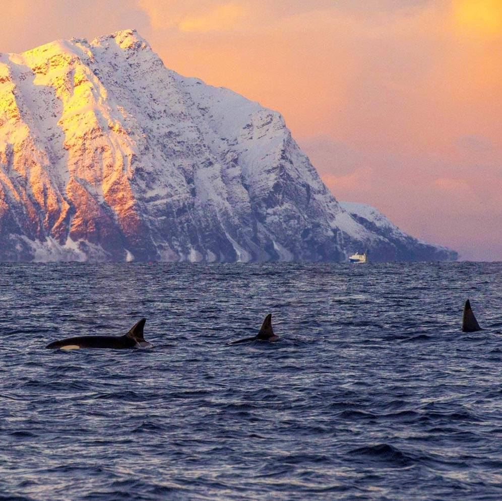 Whale Research Safari in Beautiful Skjervøy & Scenic Fjord Tour by Bus - Wild Seas