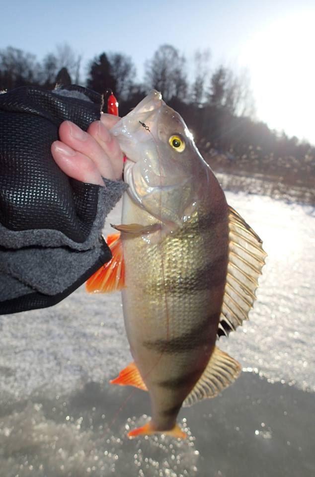 Ice fishing trip | Lautturi Group