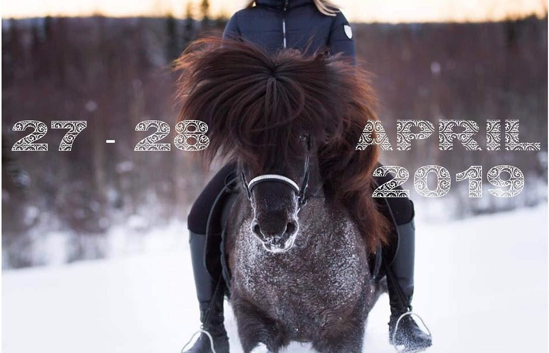 Umeå Icelandic Horse Meeting