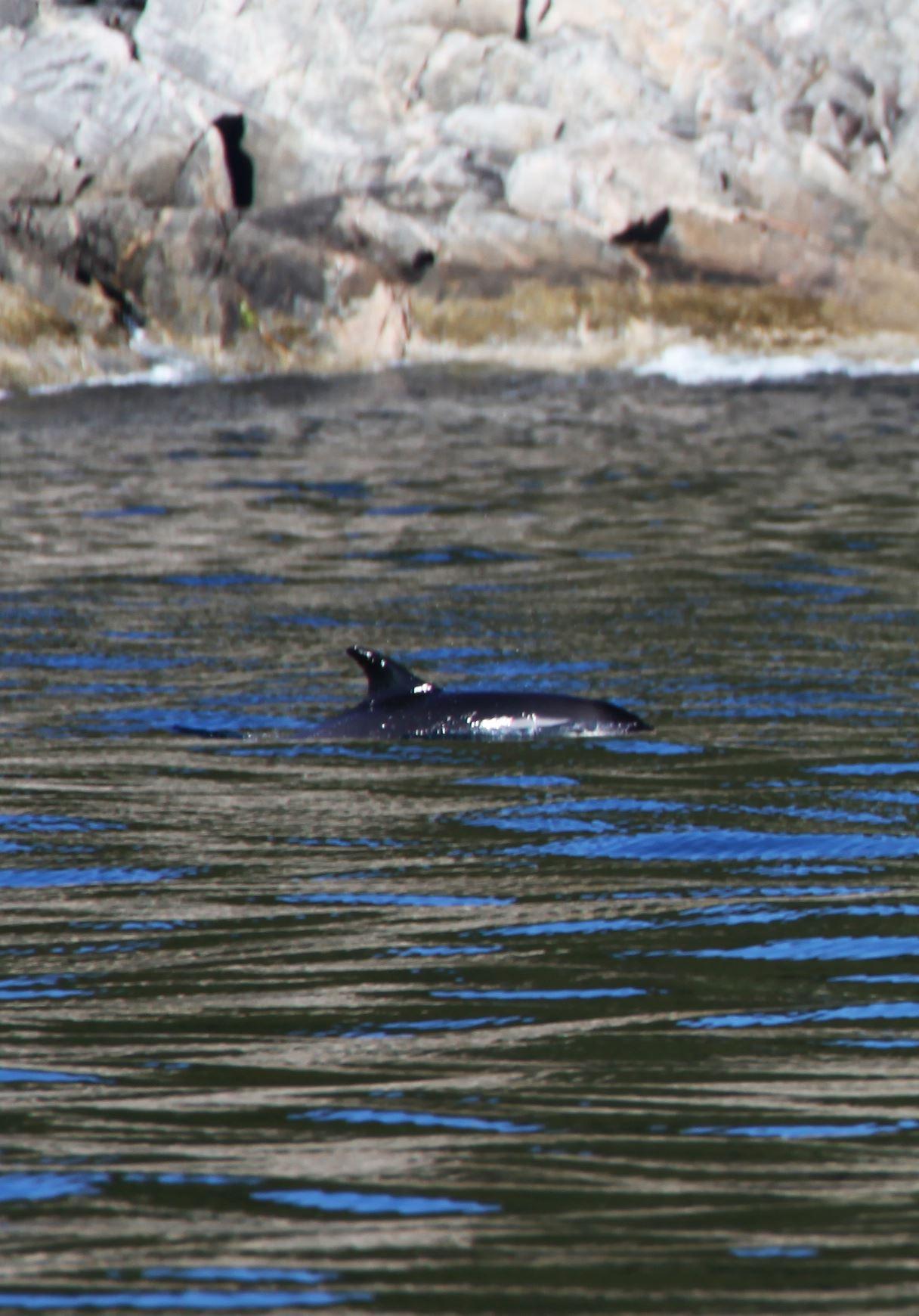 Arctic Nature Cruise - Sørøya Havfiskecruise
