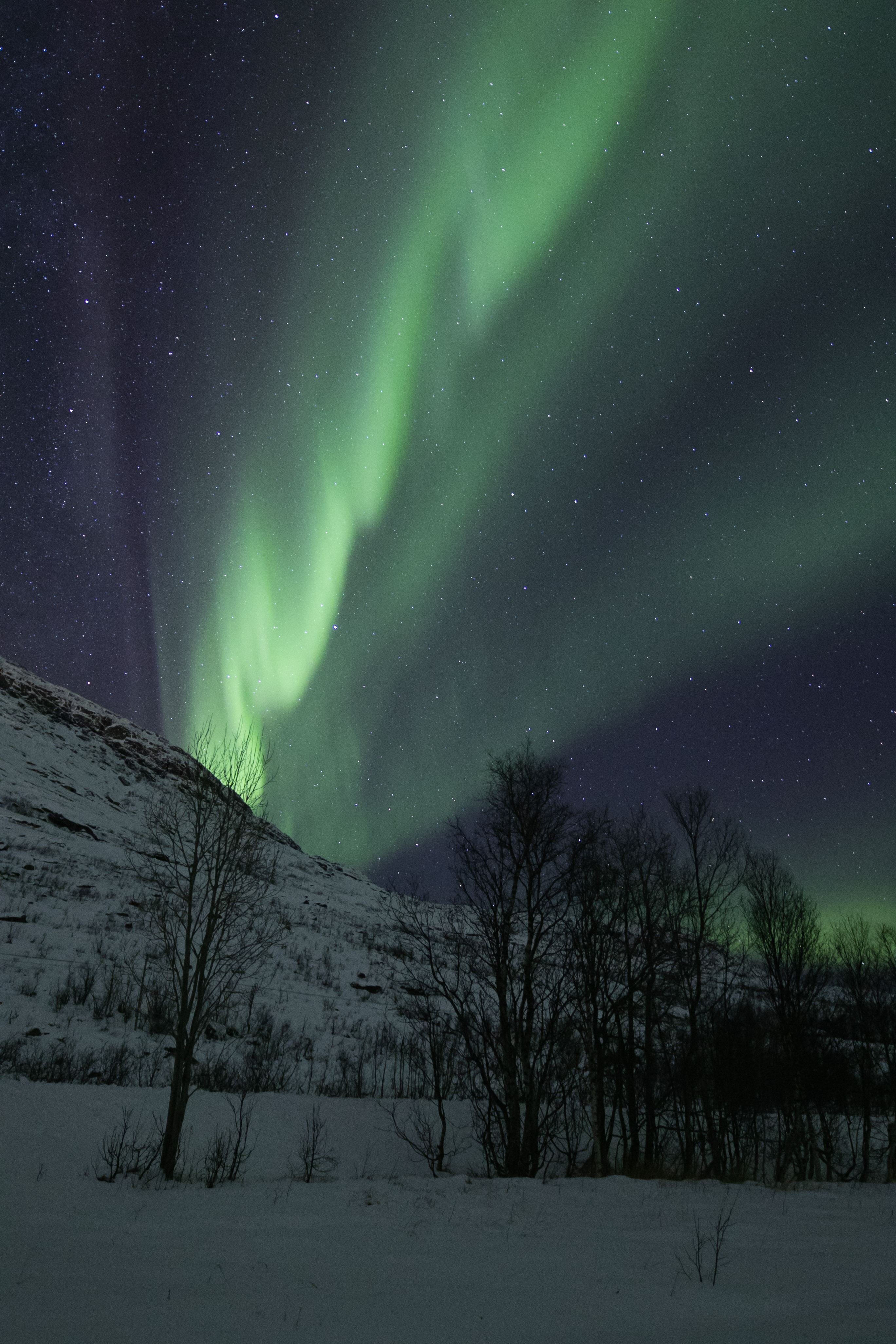 Northern Lights Coach Chase - Northern Norway Travel