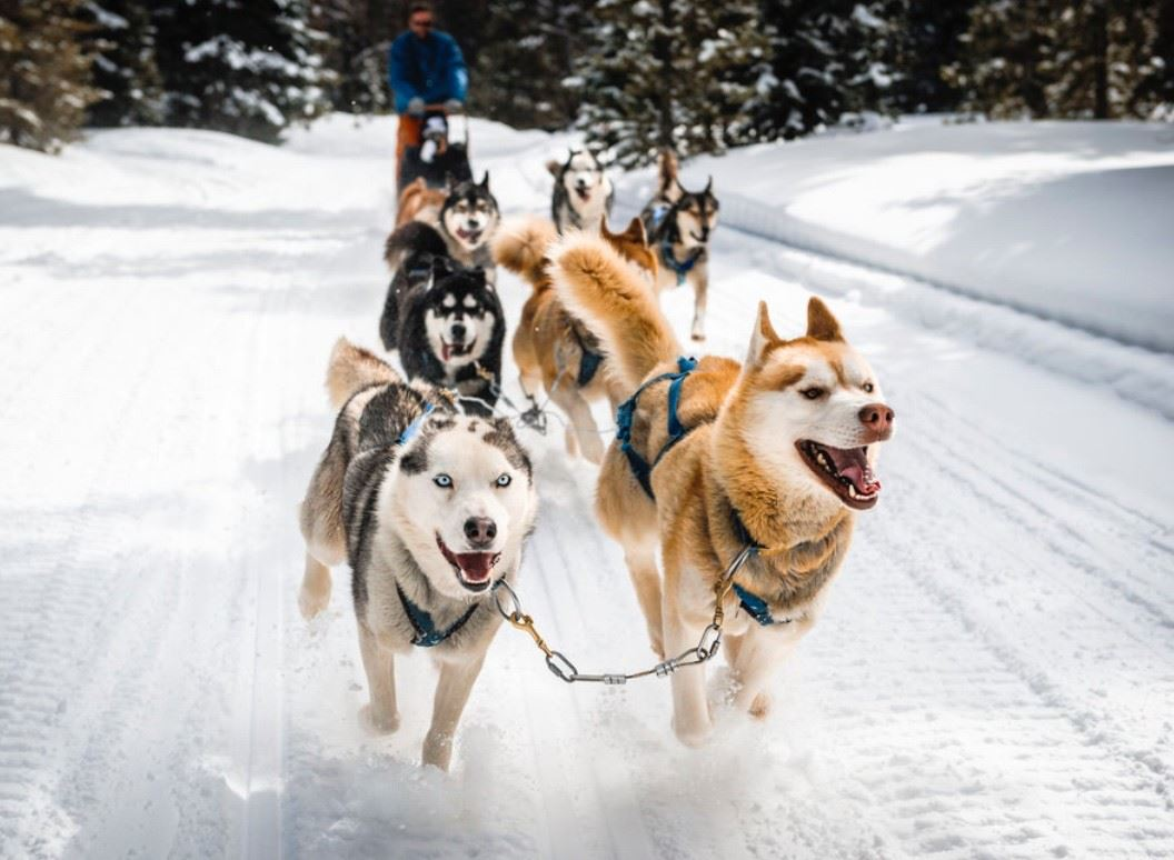Dogsledding Adventure evening tour