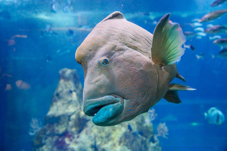 Aquarium de Biarritz
