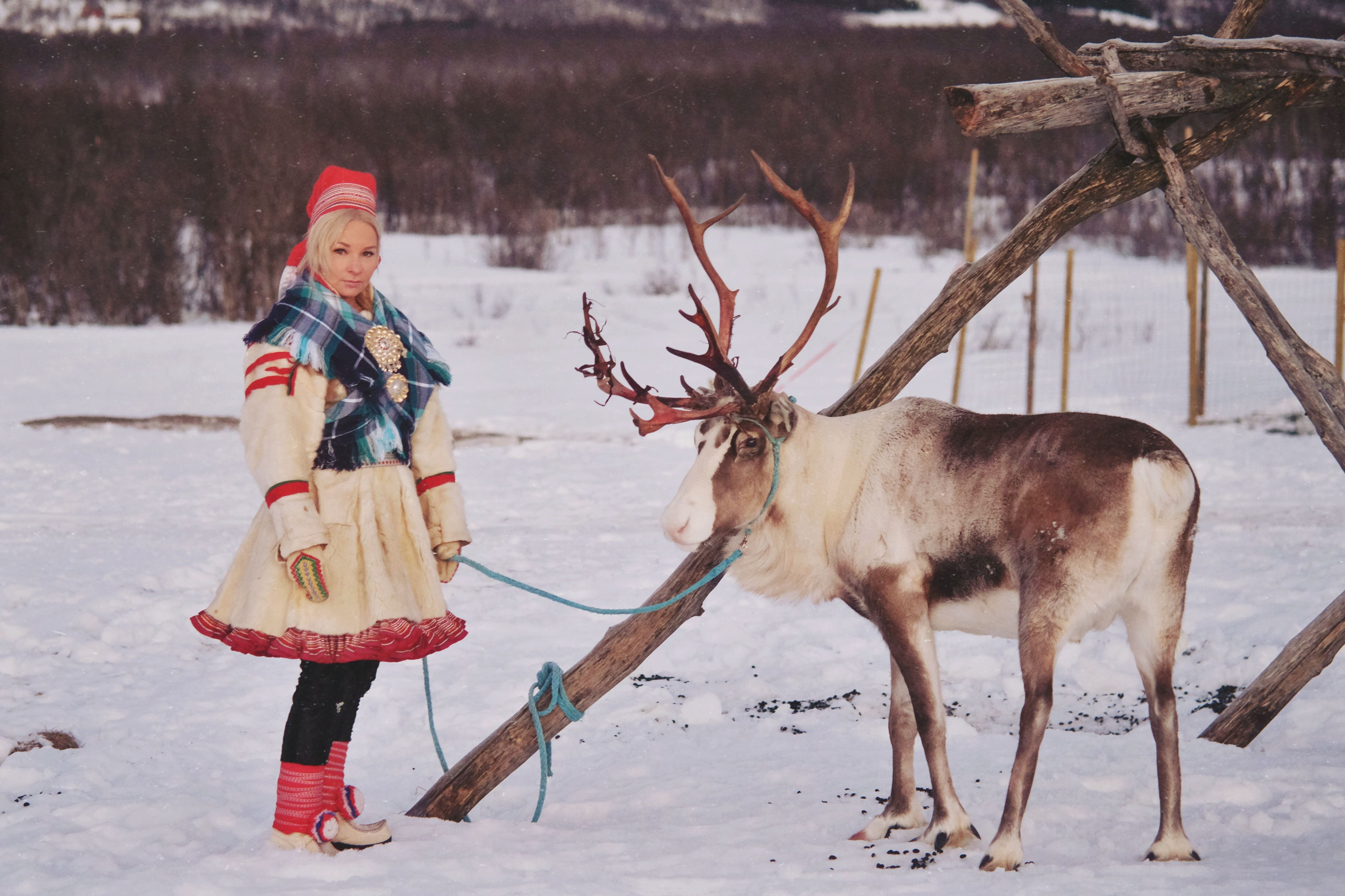 Reinsledekjøring med samisk kultur - Tromsø Lapland