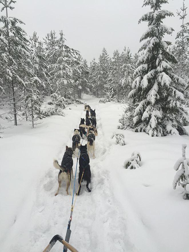 Dog sledding with River Lake Huskies