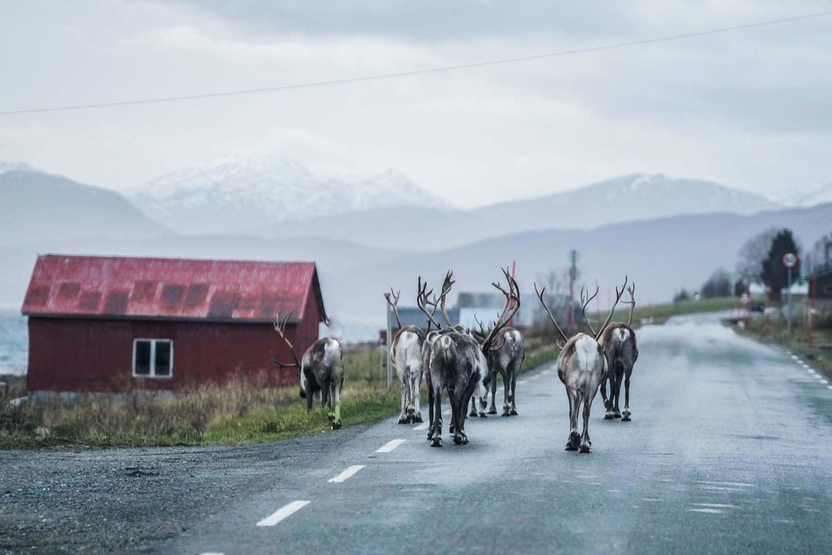 Fjordtur med minibuss - Arctic Breeze