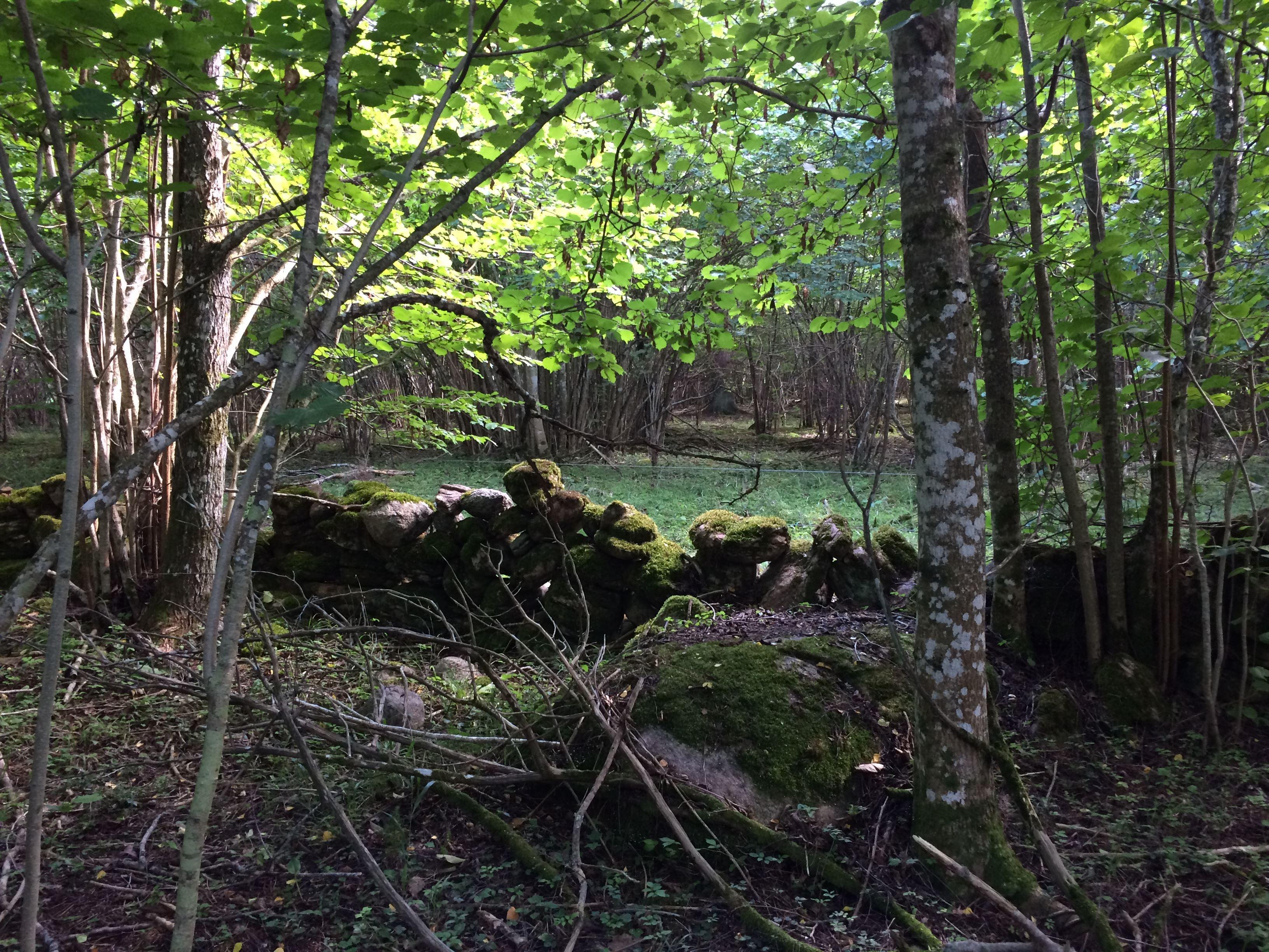 Bjällerklang i hasselskogen eller Kriget i Hagen