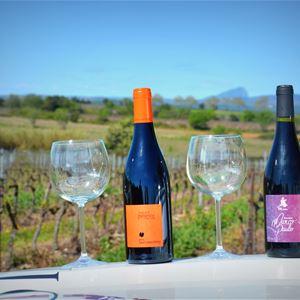 Excursion au cœur de l'AOP Languedoc Saint Christol, visite et dégustations avec Vign'O vins