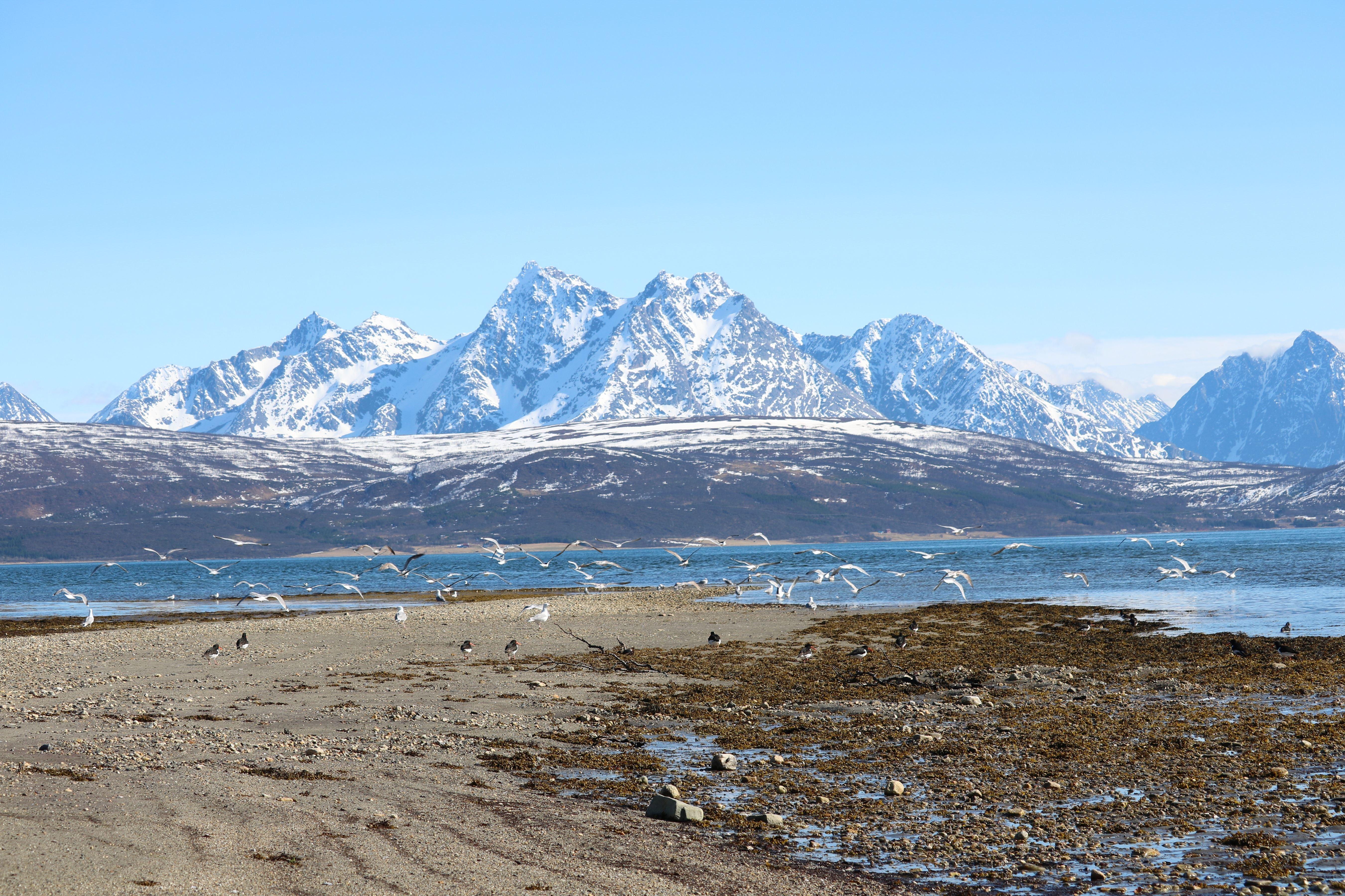 SPESIALPAKKE! - 3 netter på Polar Cabin med alt inkludert (2-6 pers.) - Polar Cabin
