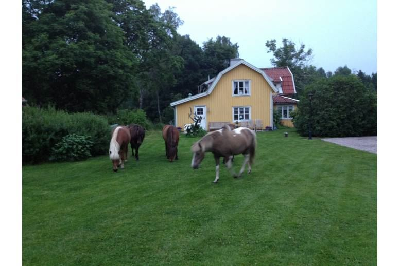 51292 Svenljunga - House on horse farm - 6163