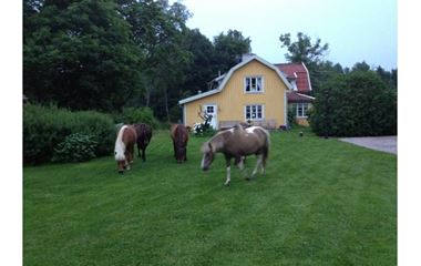 51292 Svenljunga - House on horse farm - 6163