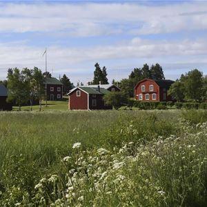 Visfestival auf der Insel Holmön