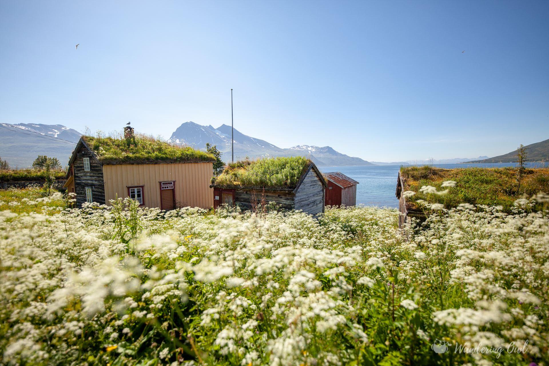 Arktiske Landskap – Sommer Arktiske Landskap – en biltur på Kvaløya – Wandering Owl