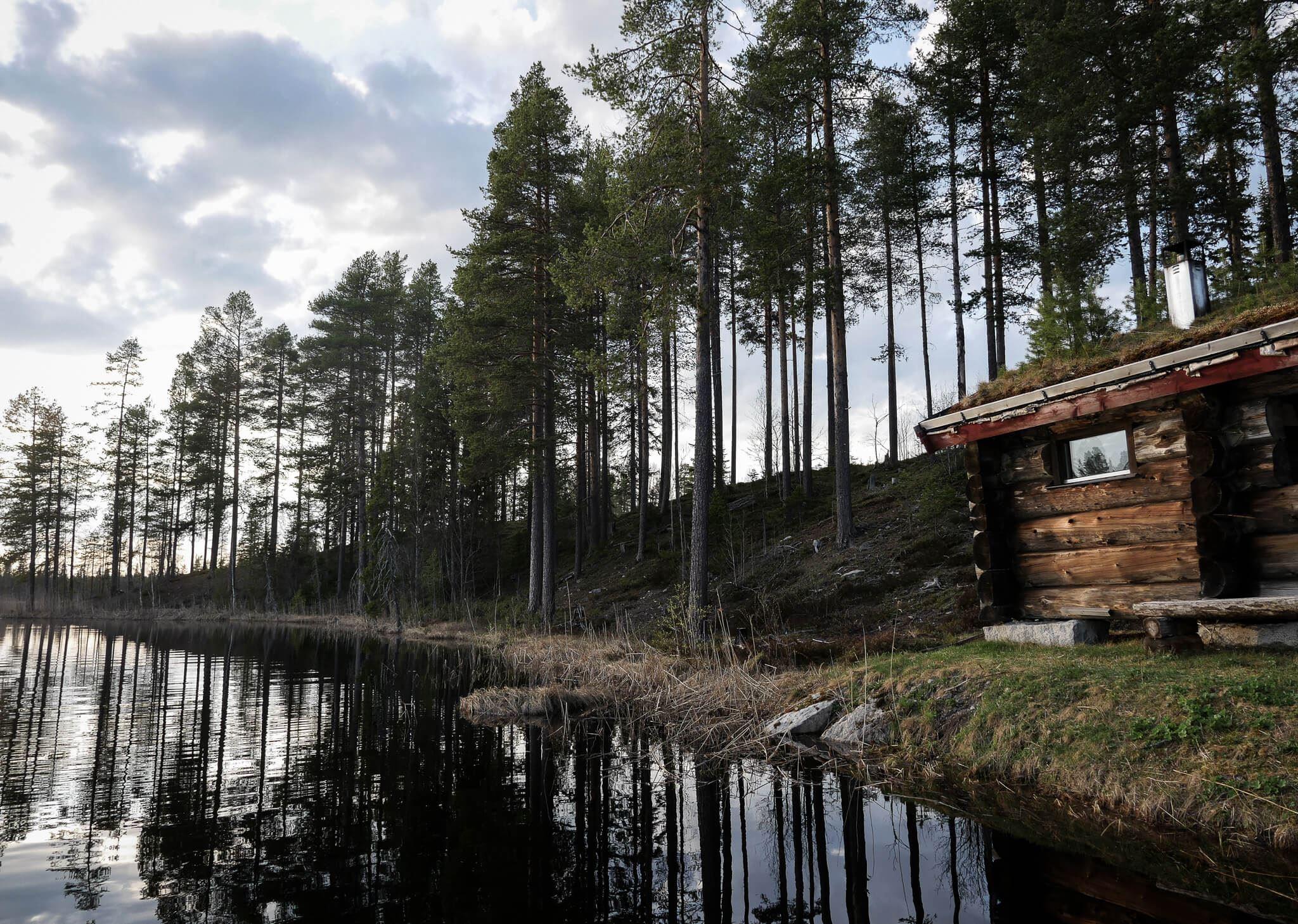 Foto: Wild Jämtland,  © Copy: Wild Jämtland, Wild Jämtland - Viltskådning