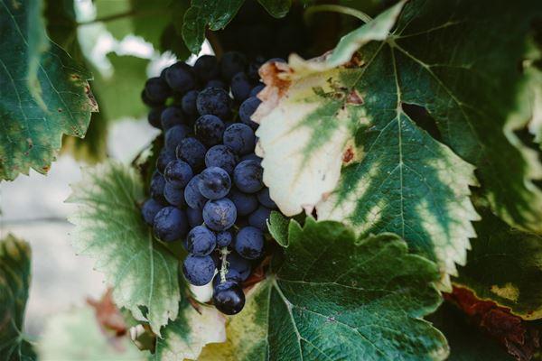 St Guilhem le Désert, histoire du vin et cuisine du marché avec Instant Terroir