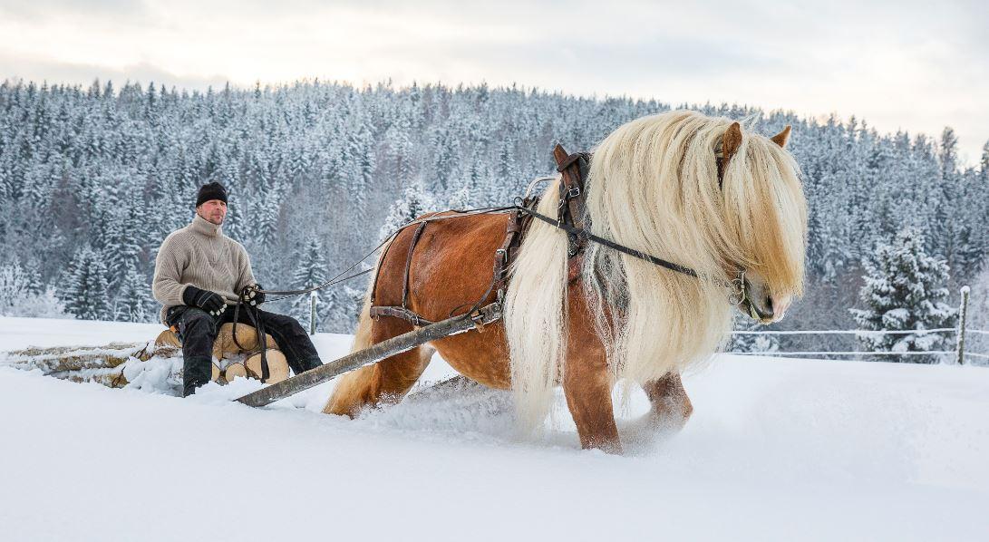 Meta Sjödin,  © Copy: Jamtli, Hästar och hästfolk