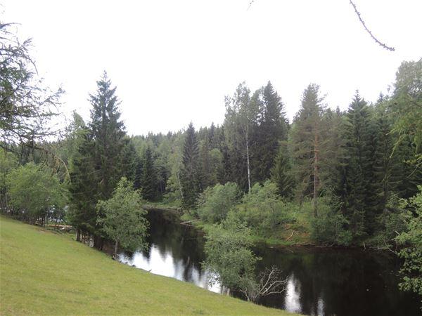 Skog med ån Hedströmmen intill.