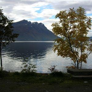 Årskogvika Camping