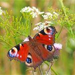 Hur många fjärilar finns det i världen?