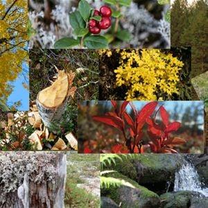 Tallhed Stugor & Natur