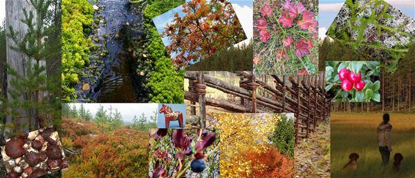 Collage med många bilder på blommor, dalahäst och gärdesgård.