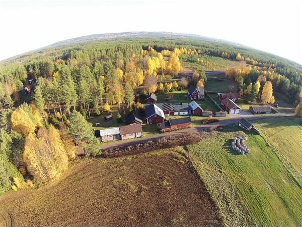 Flygfoto över Tallhed Stugor & Natur. Träd med höstfärger och åkrar.