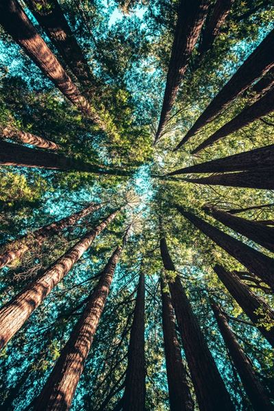 Upptäcktsfärd i skogen