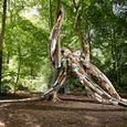 La Forêt Monumentale (promenade guidée)
