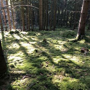 STF Ivö/Ivögården Mat & Vingård