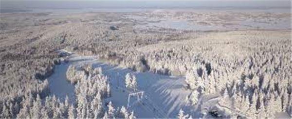 Utsikt över snötäckta grantoppar.