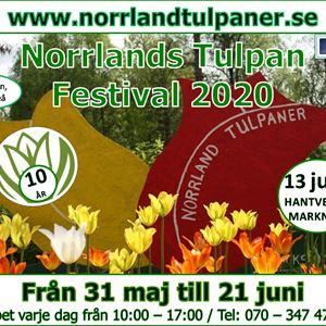 Carolina Visser, Norrlands Tulpan festival
