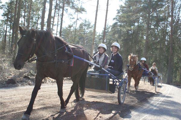 Sportlovsaktivet på Kalmartravet