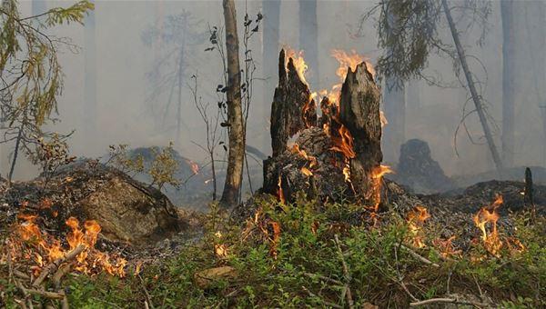 Tema skog: skogsbränder