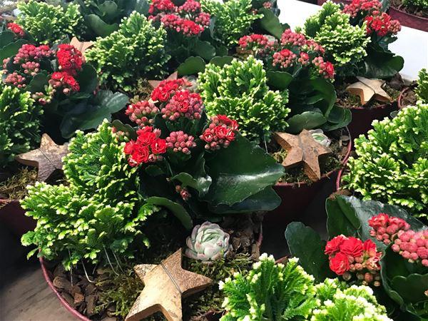 INSTÄLLT - Julmarknad i växthuset på Forsa Handelsträdgård