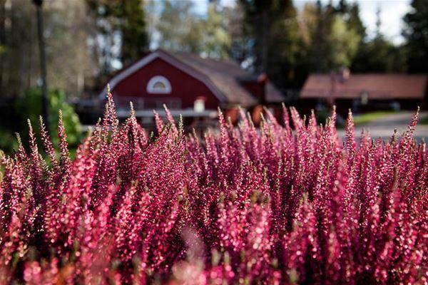 Påsk Växbo Krog påskmiddag Restaurang Hälsingland