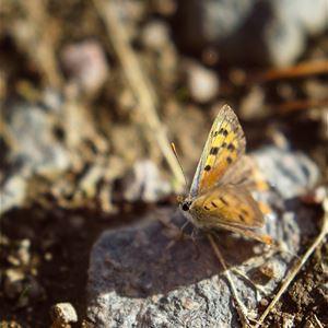 Okända och ökända arter