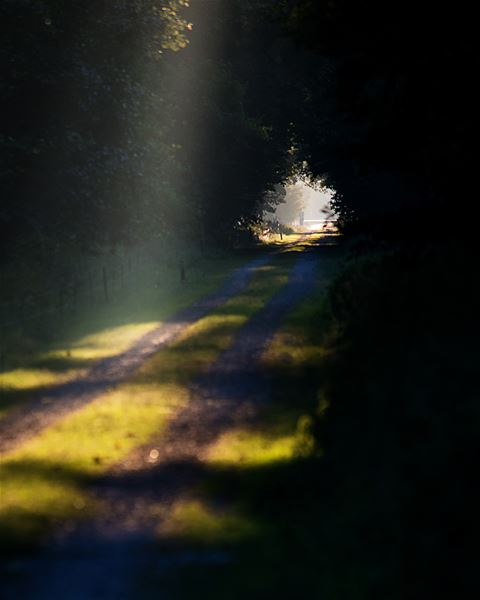 Skogsbada i världsarvet