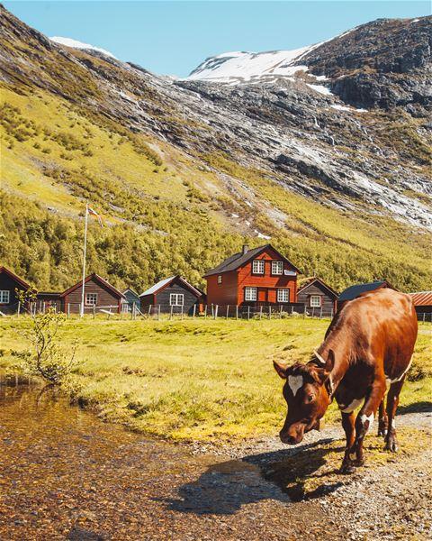 © Ruben Soltvedt, Bødalseter