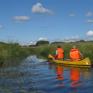 Två män paddlar kanot genom vassen.