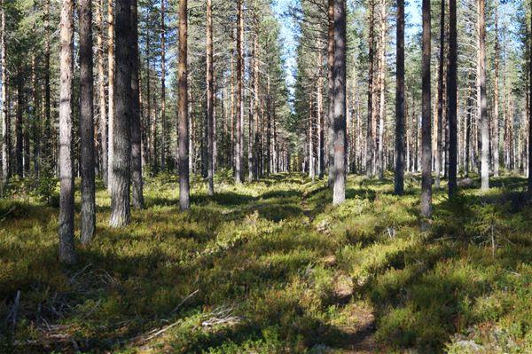 Naturpasset - orientering
