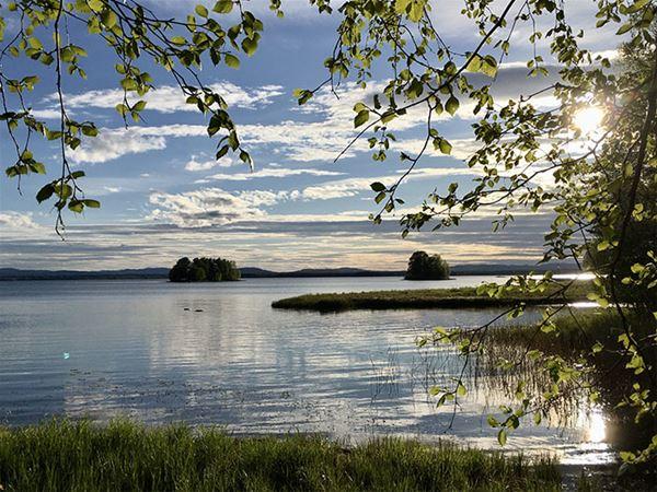 Spegelblank sjö med två holmar i horisonten och gröna blad från ett träd i förgrunden.