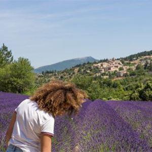 Tour Lavande - Demi-journée Luberon - A la Française ! Provence