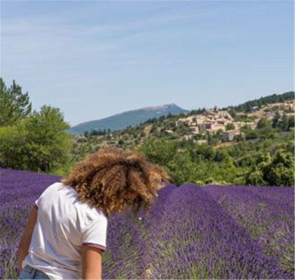 Lavander Tour - Half-day Luberon - A la Française ! Provence
