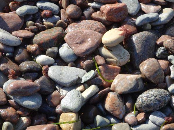 Sten och strand, flisa och fossil