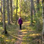Forest bathing by the Ersk-Matsgården