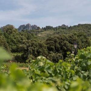 Tour privé Journée 8H00 / 200 KMS - A la Française ! Provence