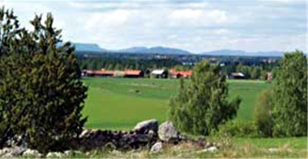 Vy över gravfälten på Sollerön.