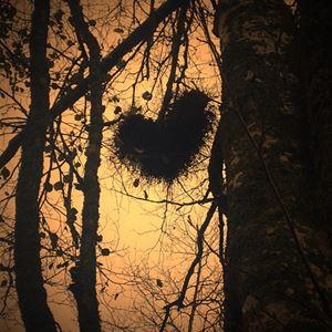 Berättarkväll vid elden - Om troll, vittror och skogsrå