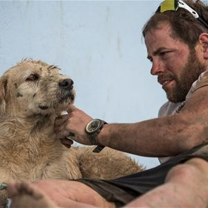 © Copy: https://www.facebook.com/events/862569377563244, FRAMFLYTTAT, Arthur - gatuhunden som lämnade djungeln och hittade hem